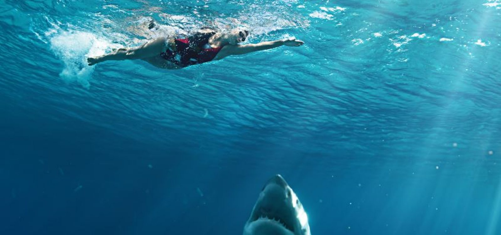 Why are there more shark attacks being reported in NSW?