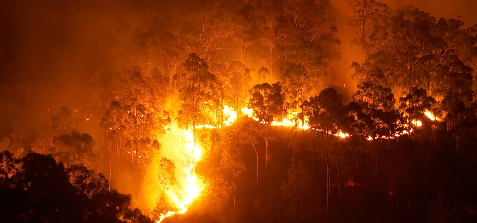 Insuring the inferno: addressing bushfire risk in a changing climate